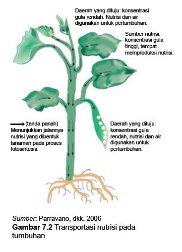 Transportasi nutrisi pada tumbuhan