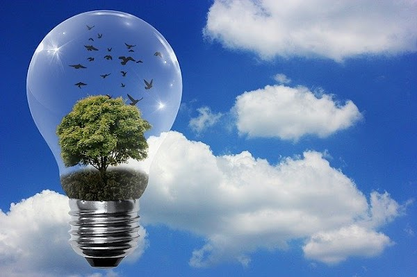 Como Cuidar el Planeta: 10 Formas de Cuidar la Tierra