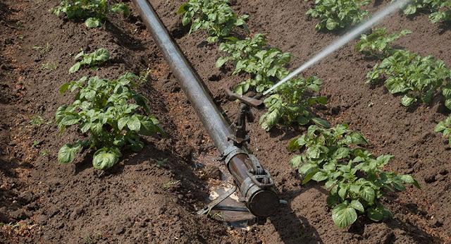 Se pierde 80% de agua de riego en Armenia