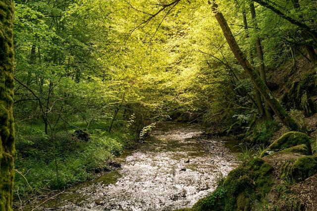 Traumschleife Baybachklamm | Saar-Hunsrück-Steig | Wandern Kastellaun | Premiumwanderweg Hunsrück 05