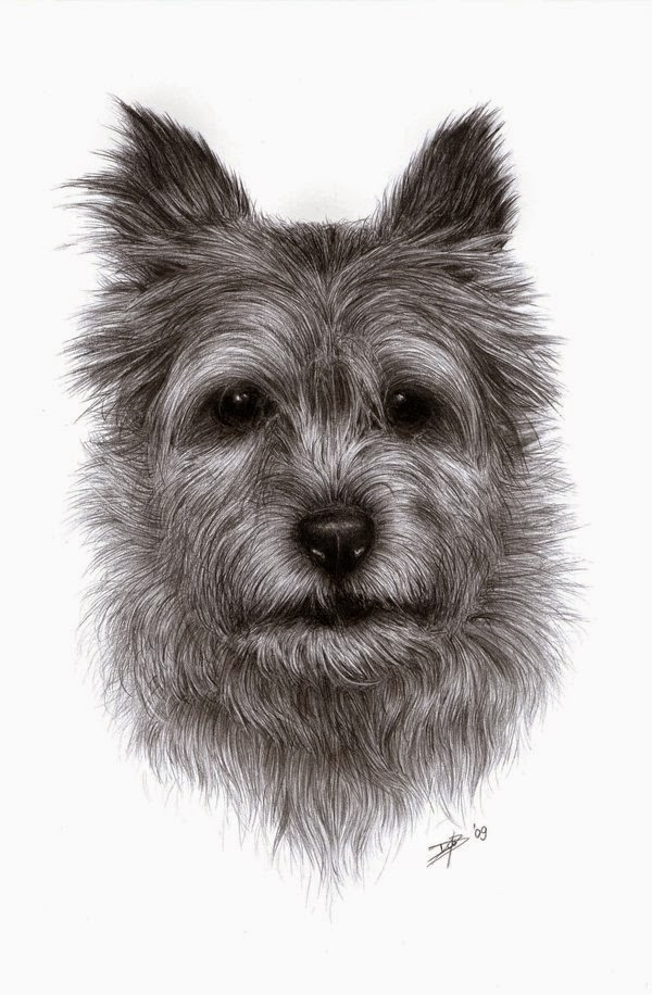 07-Dog-portrait-2-Daisy-van-den-Berg-How-To-Draw-a-Realistic-www-designstack-co
