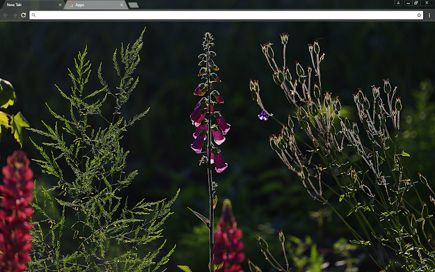 Nature's Beauty Google Chrome Theme