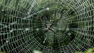 How does a spider make a net and from where does it get a thread?