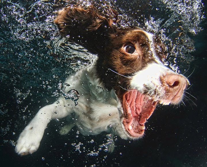 Photography Underwater Puppies By Seth Casteel Art For