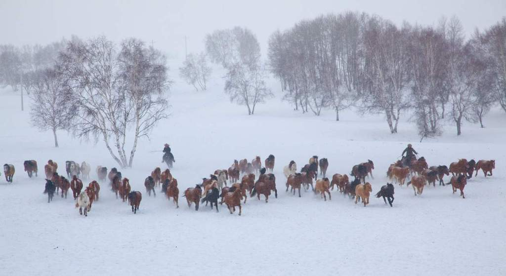 Winter is Coming: Get Your Horse's Hooves Through It