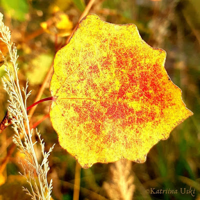 Keltaiseksi muuttunut puun lehti