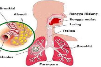 Contoh Organ yang Berperan Dalam Pernapasan