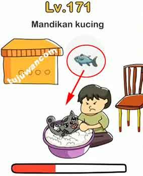 Memandikan Anak Kucing : memandikan, kucing, Brain, Mandikan, Kucing, Jawaban, Peringkat, Tujuwan.com