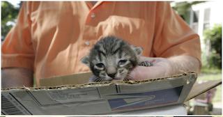 Πανελλήνια οpγή: Σκοτώνει γάτες και δίνει συνταγές για φόλες στο Facebook