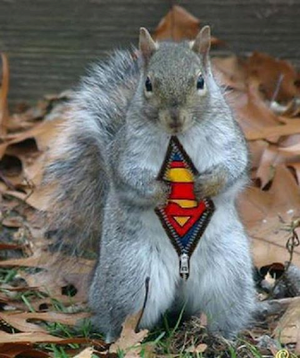 https://www.facebook.com/#!/SquirrelsAreCute?hc_location=stream