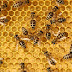 Bee swarm kills one person and hospitalizes another
