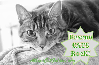Tabby cat Rescue Cats Rock graphic