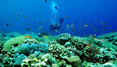 Taman Laut Kepulauan Sangihe