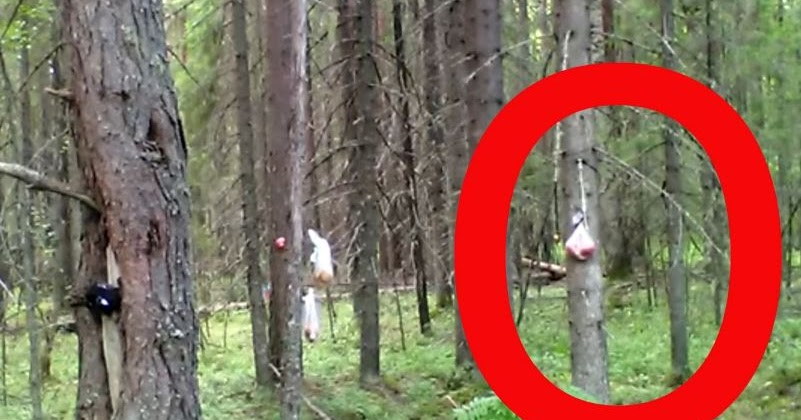Bigfoot Evidence: New Russia Bigfoot Video