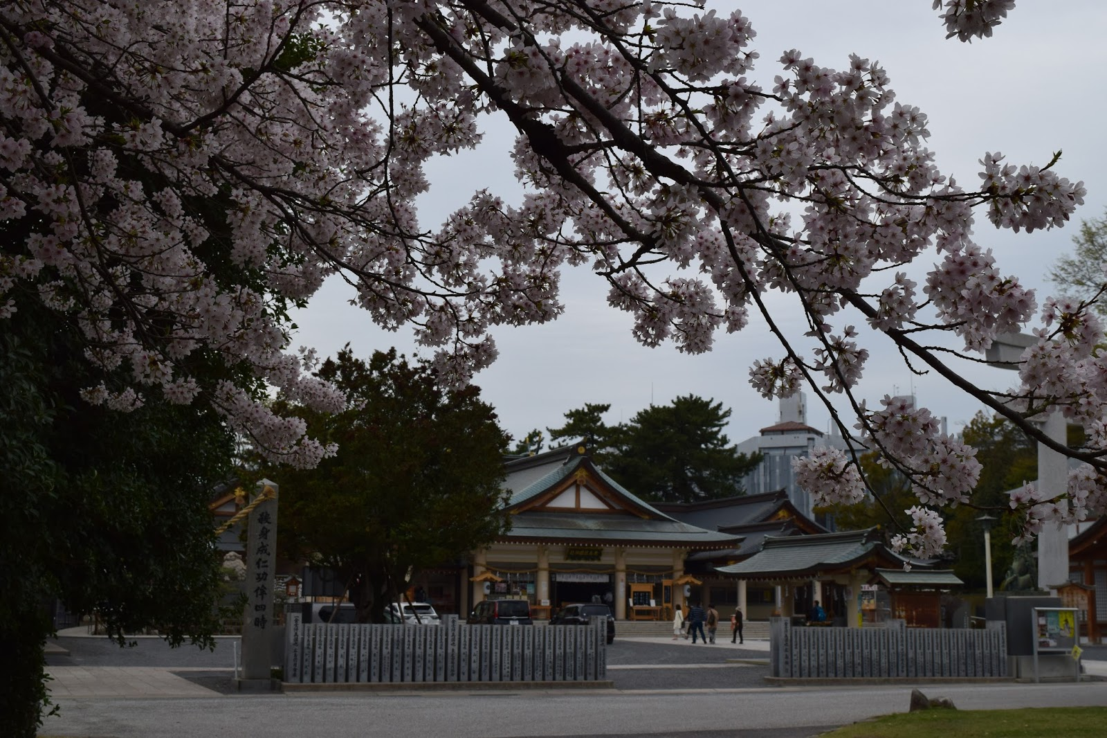 Shrine and Cherry blossom