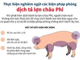 Dịch tả lợn Châu phi có lây lan qua chó mèo hay không?
