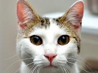 Cat Animal Pictures
