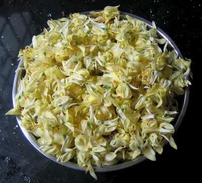 Moringa oleifera flowers