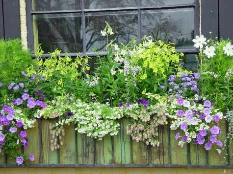 The Definitive Guide To Window Box Design The Impatient Gardener