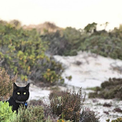 Rescue Cat Travels 48,932km Around Australia on the Trip of a Lifetime
