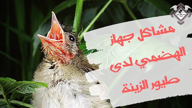 مشاكل الجهاز الهضمي لدى طيور الزينة