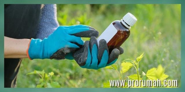 Manfaat Menanam Tanaman Secara Hidroponik - menekan penggunaan pestisida