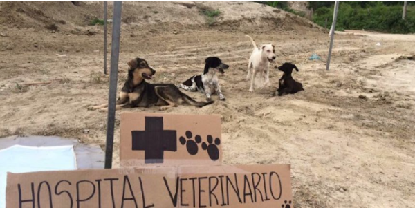 Solicitan insumos para animales afectados por el terremoto