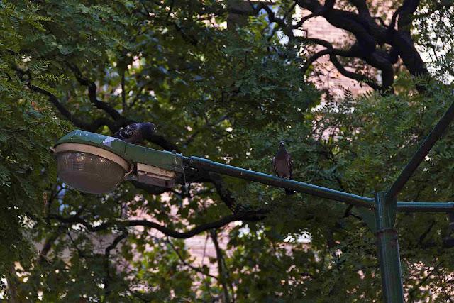 Palomas en una torre alumbrado