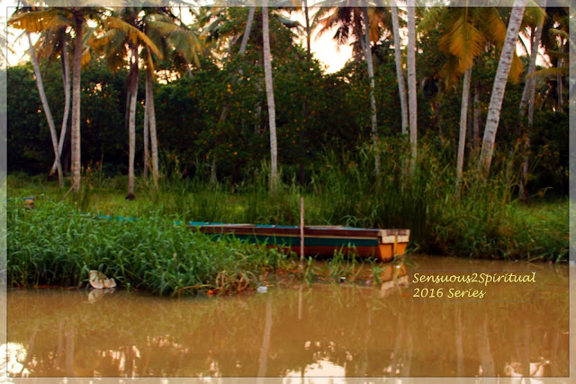 Neyyar river, backwater cruise, poovar estuary