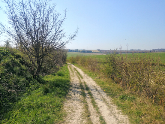Braughing bridleway 14 heading WSE (point 12)