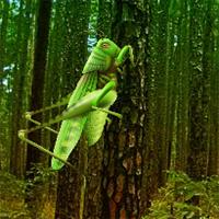 Wow Grasshopper Forest Es…