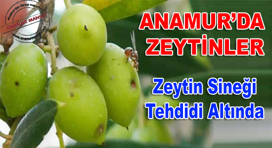 Anamur, Anamur Haberci, Anamur Haber, Anamur Haberleri, Anamur Son Dakika,