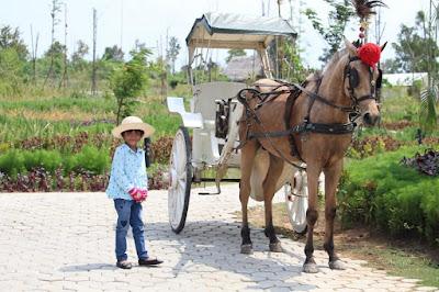 Harga sewa kuda Desa Wisata Ekang Bintan