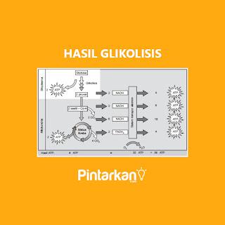 Hasil Glikolisis