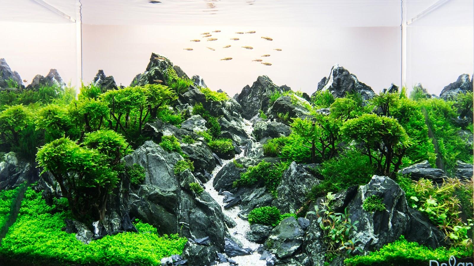 Một bố cục hồ thủy sinh ấn tượng dùng lũa xương làm tán cây