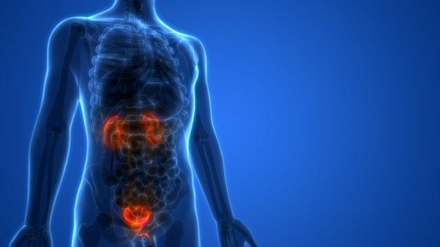 Signes précoces et tardives du cancer de la Vessie