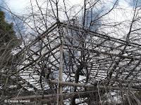 Tree support close up - Shosei-en Garden, Kyoto, Japan