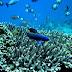 Universitas Pattimura Temukan Tiga Jenis Ikan Karang Baru