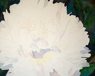 White Peony Watercolor Painting – WIP Update 2