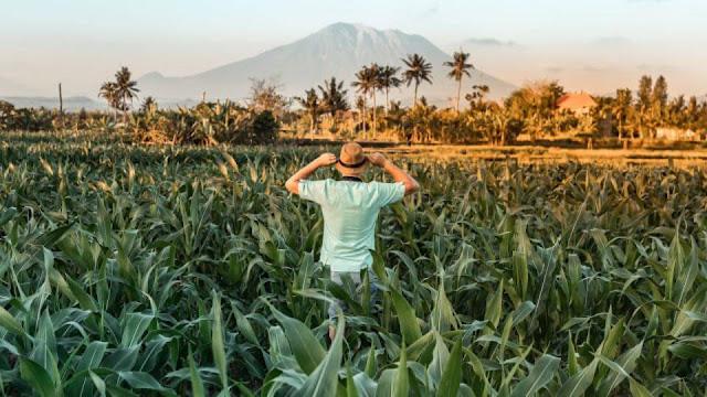 Ide Bisnis Online Menjanjikan Walaupun Tingga di Desa