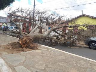 Em Cuité, árvore tomba e atinge carro