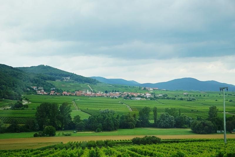 viinitie, saksalaiset viinit, automatka
