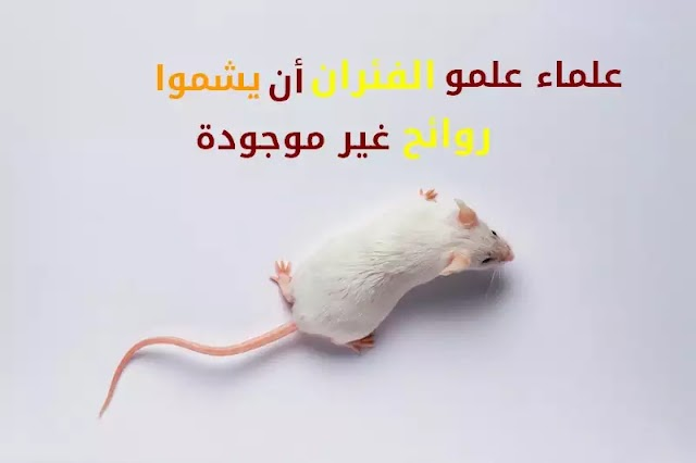 علماء علمو الفئران أن يشموا رائحة غير موجودة