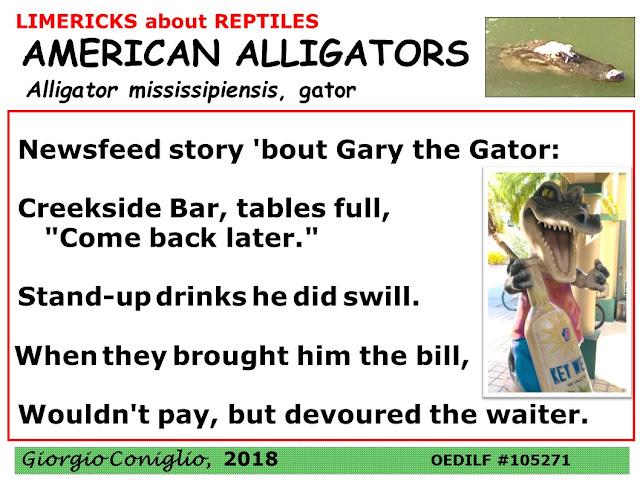 limerick; reptiles; alligator; aggressive; Florida; South Carolina; Giorgio Coniglio