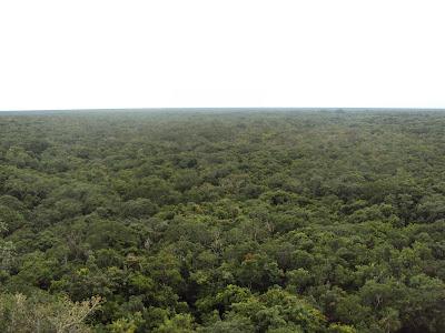 Vistas desde arriba de la pirámide de Cobá
