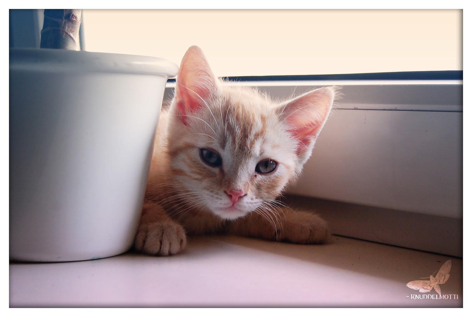 Wallpaper Pubg Kualitas Hd: 100+ Wallpaper Kucing Lucu Dan Comel Kualitas HD