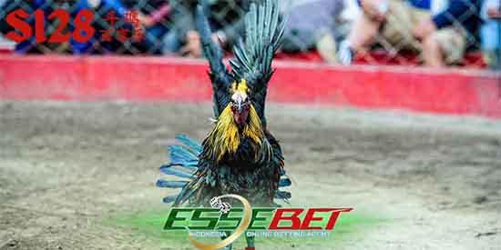 Judi Ayam Online