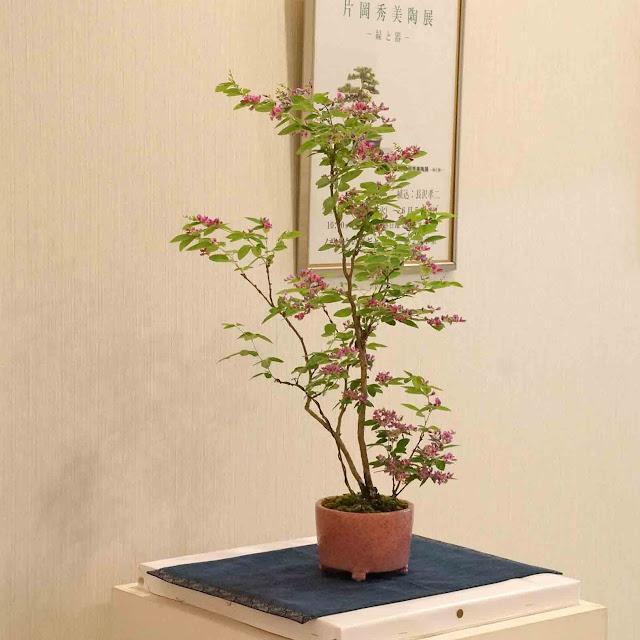 The exhibition featuring bonsai pots