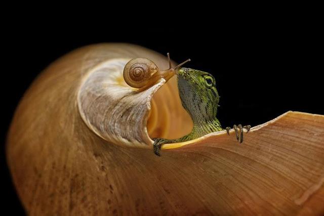 photo, finalist, agora awards, snail, lizard