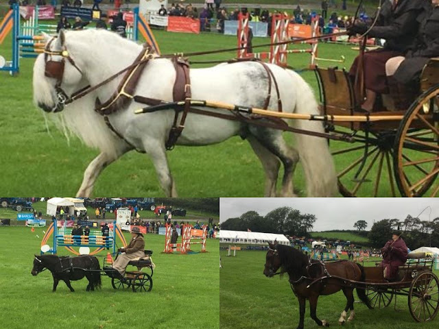 carriage driving at Westmorland County Show